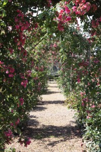july ed crispin rose walk